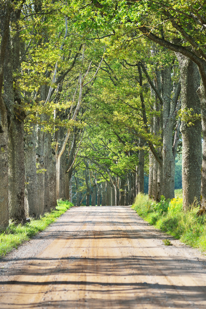 Old Road Through The Beautiful Alley In The Countryside. Ligatne