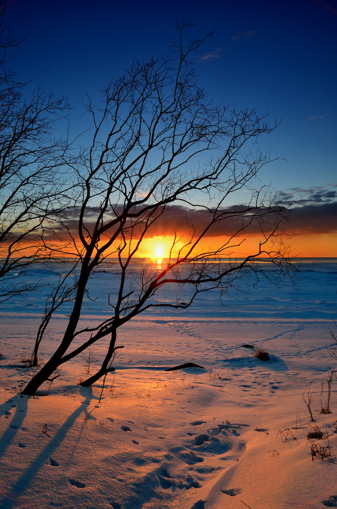 Tree Silhouette Against Colorful Sunset At The Snowy Baltic Sea Shore