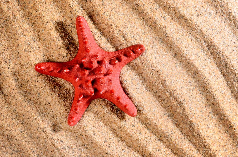 Sea Star On The Sandy Beach
