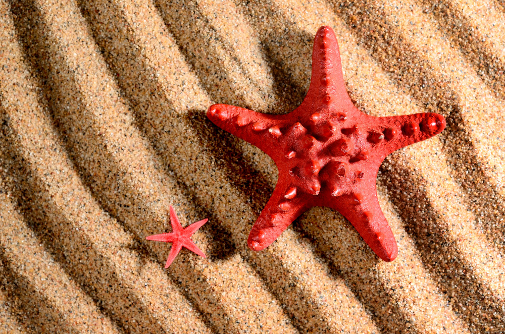 Two Sea Stars On The Sandy Beach
