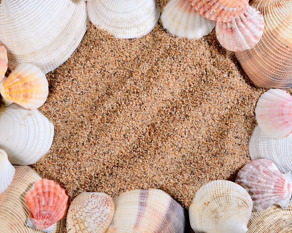 Sea Shells On The Sandy Beach Framing Image