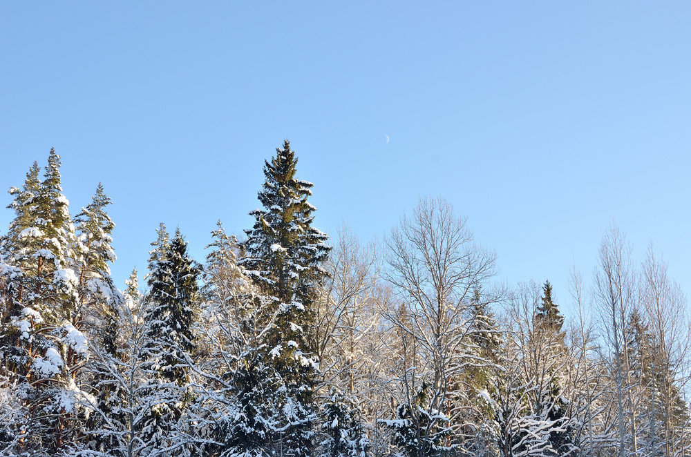 Winter Forest Landscape Against Blue Sky