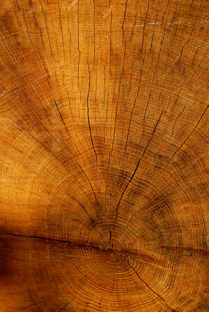 Cutted Tree Texture