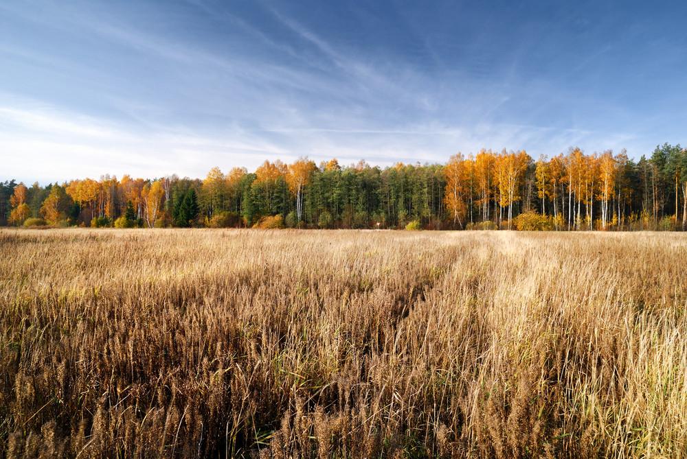 Cereal Field In Fall Season. Latvia
