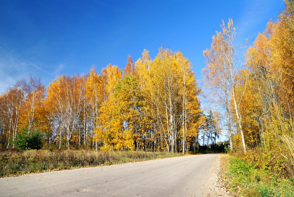 Country Road In Fall Season. Latvia