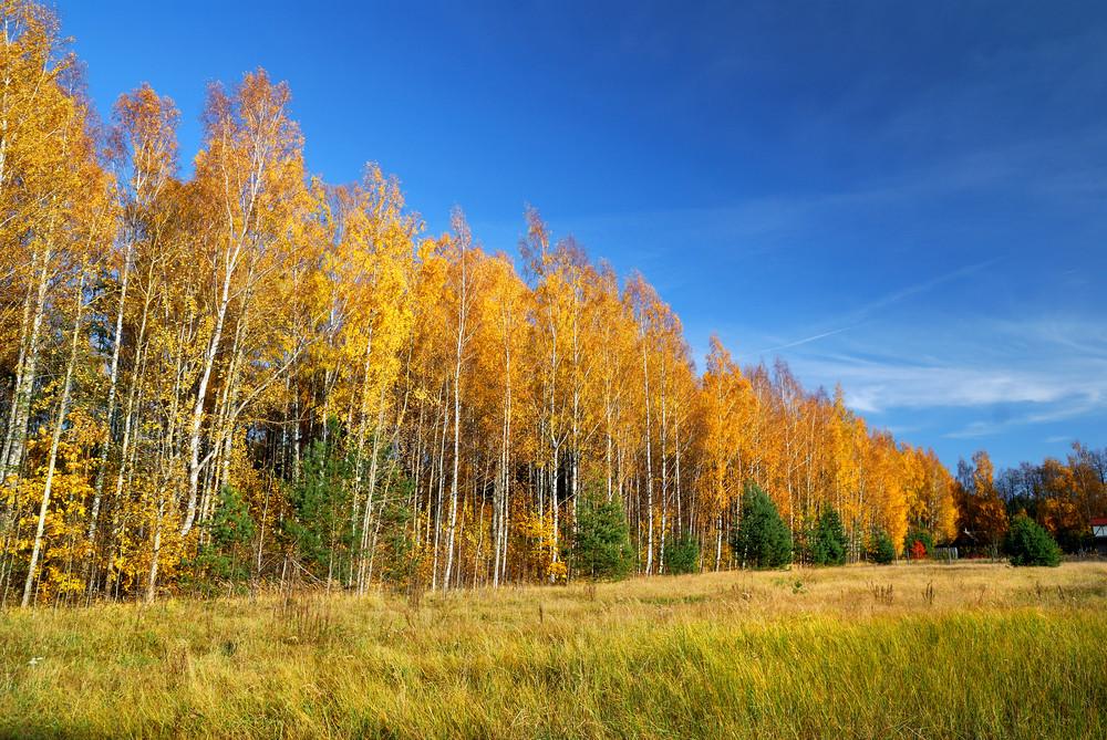 Classical Autumn Landscape