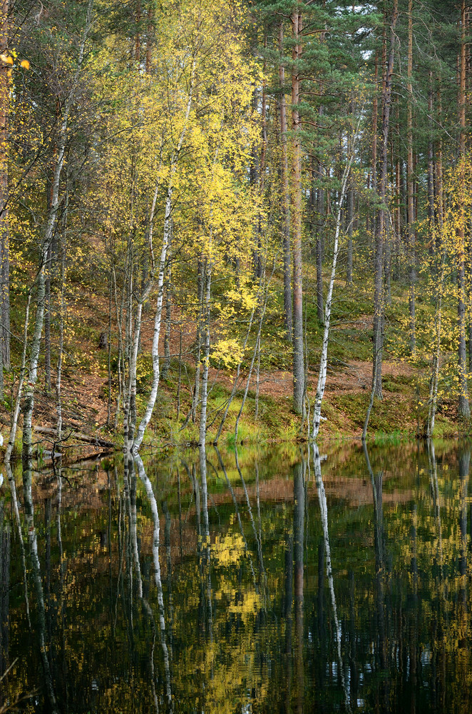 Dark Pine Forest And A Lake In Autumn