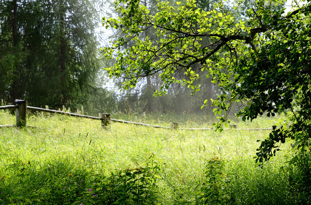 Countryside Forest Scene