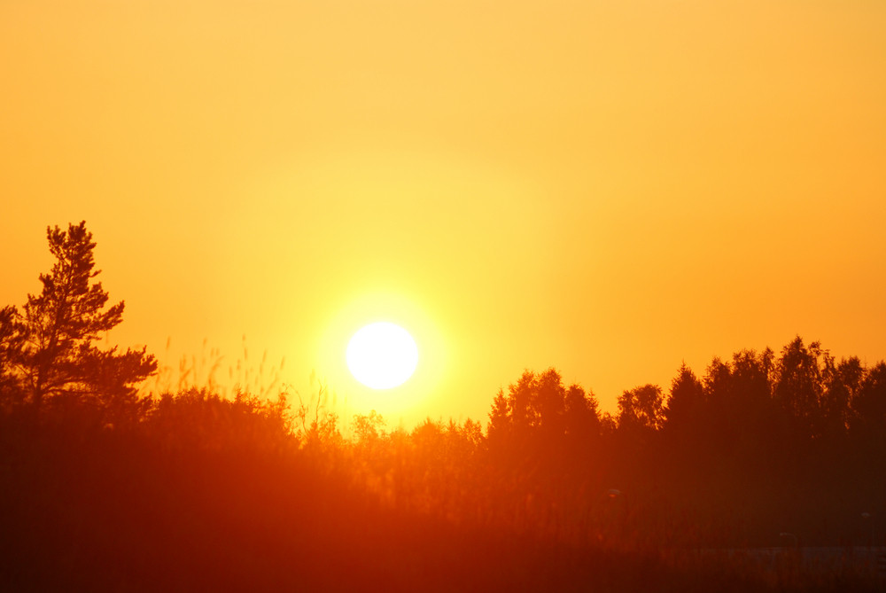 Early Orange Clear Sunrise In The Forest In Summer