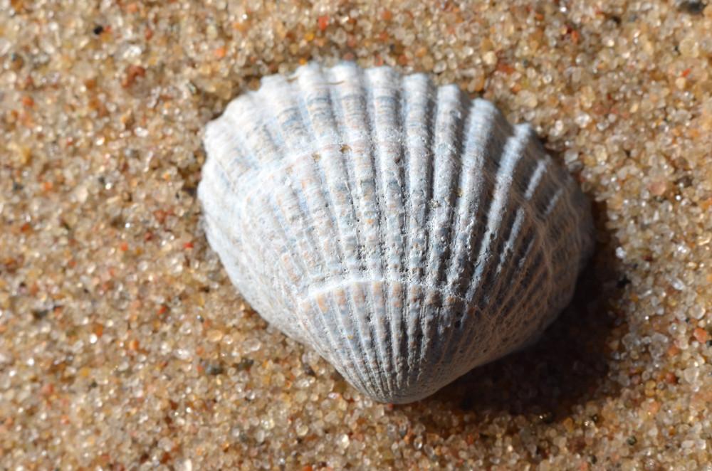 Sea Snail Shell On The Sand