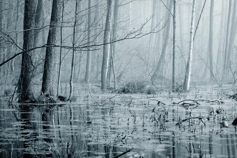Swamp In Fog At The Sunrise