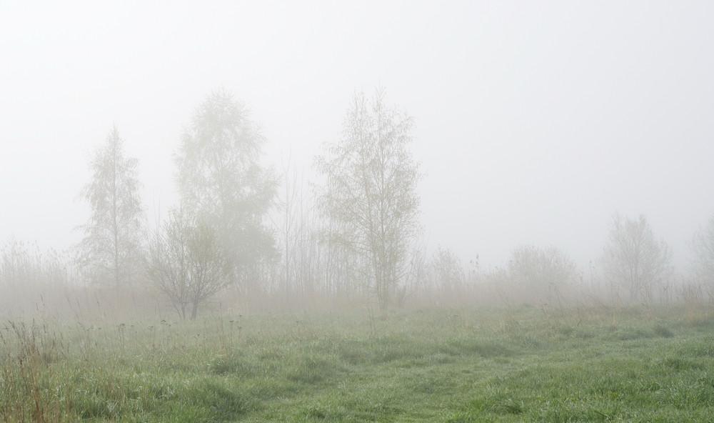 Rural Landscape In Fog