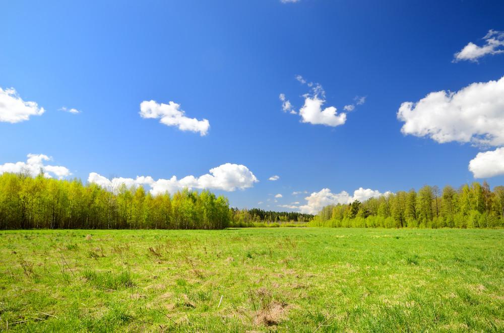 Classical Meadow Landscape