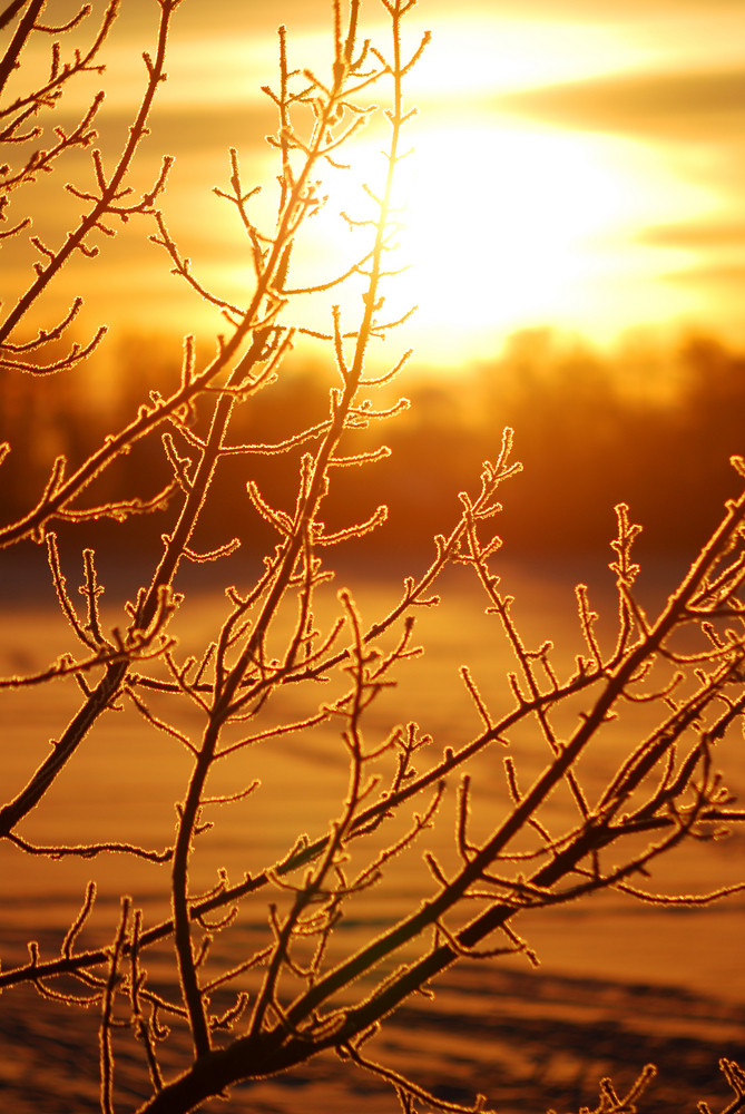Frost On Tree At The Lake Shore At The Sunrise