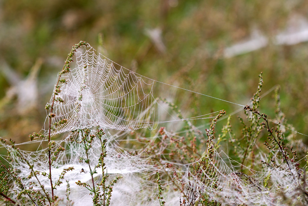 Spider's Web In The Early Morning