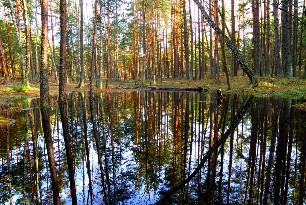 A Small Lake In The Forest
