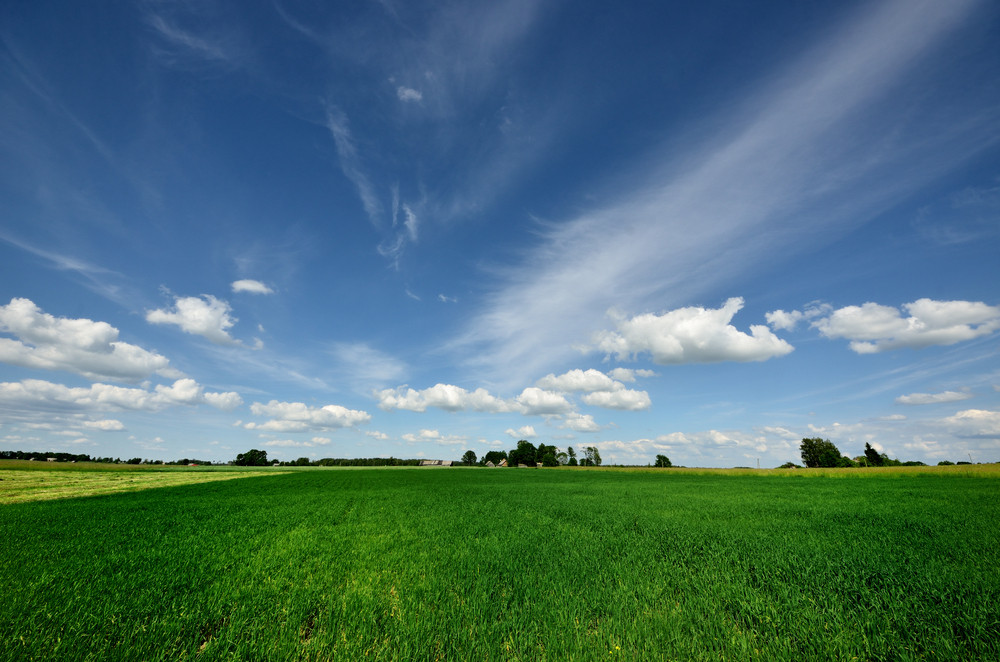 Classic Rural Landscape. Green Field Against Blue Sky