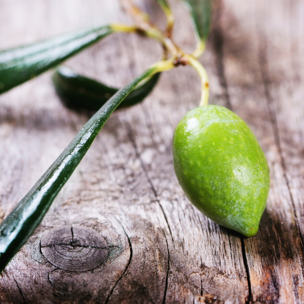 Green Olive Branch