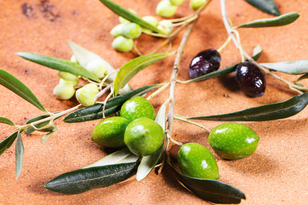 Green And Black Olive Branch