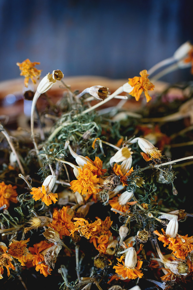 Dry Tagetes Flowers