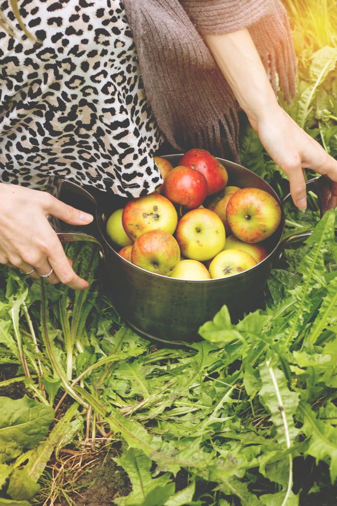 Pan Of Apples