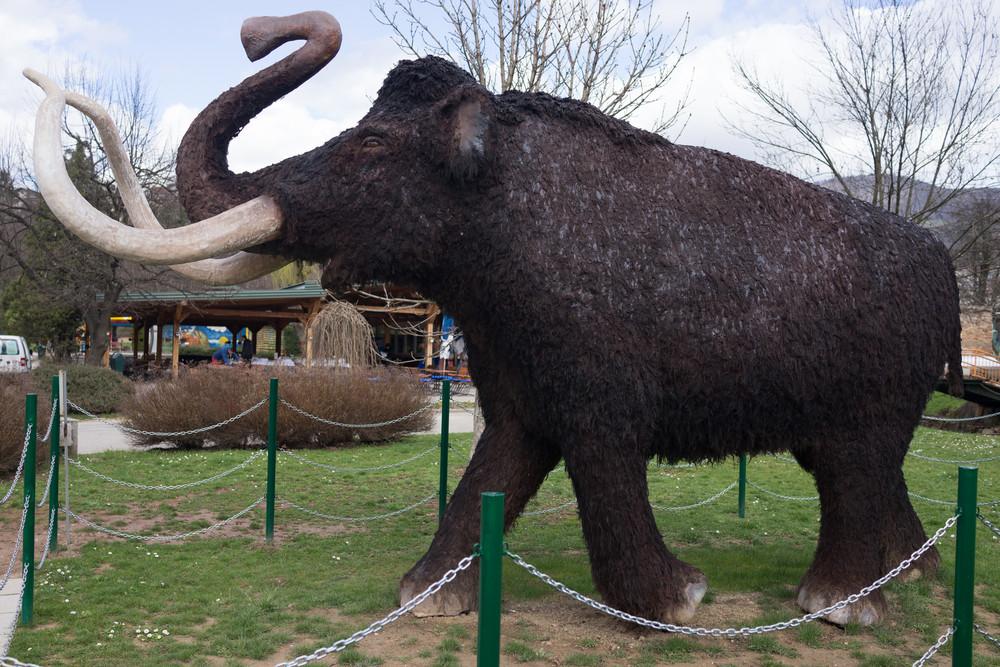 Mammoot in zoo