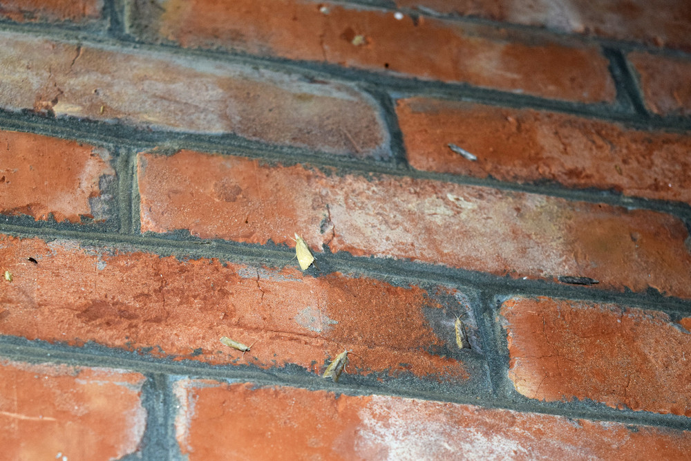 Other moths on a brick wall The flying insects to the light bulb
