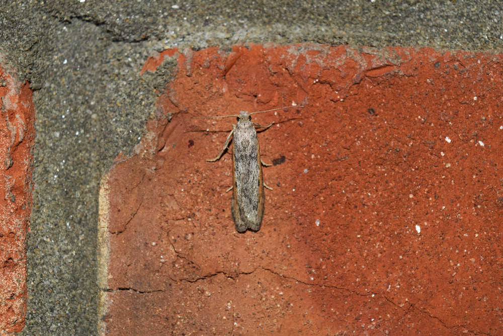 Night butterfly on a brick wall The flying insects to the light bulb