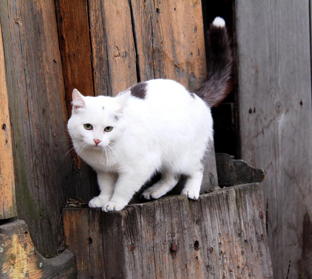 Cat on a tree stump Furry pets