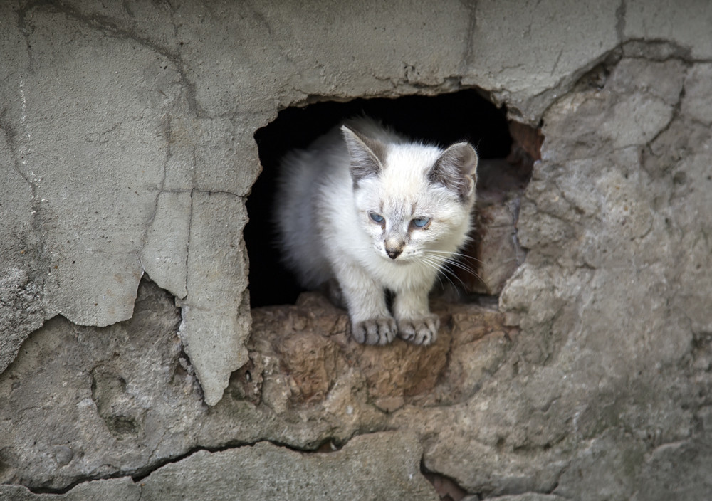 Kitten peeking out of a hole Furry pets