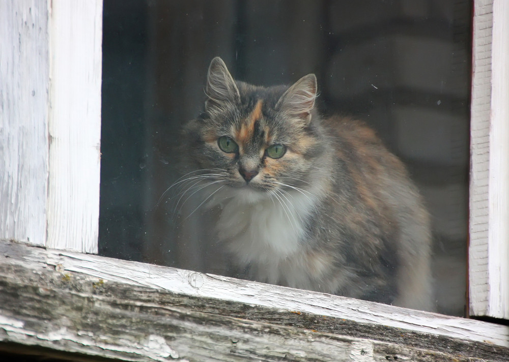 Cat on the window pane