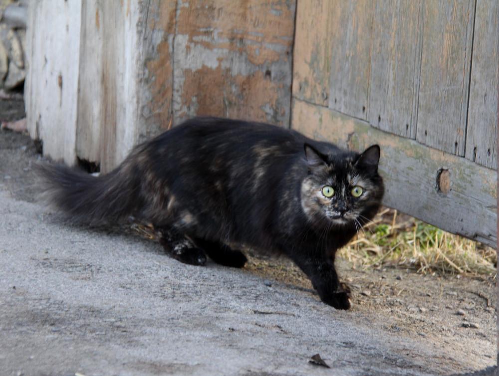 Cat Furry pets
