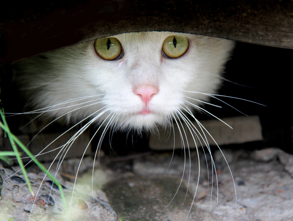 Cat looking out of hiding