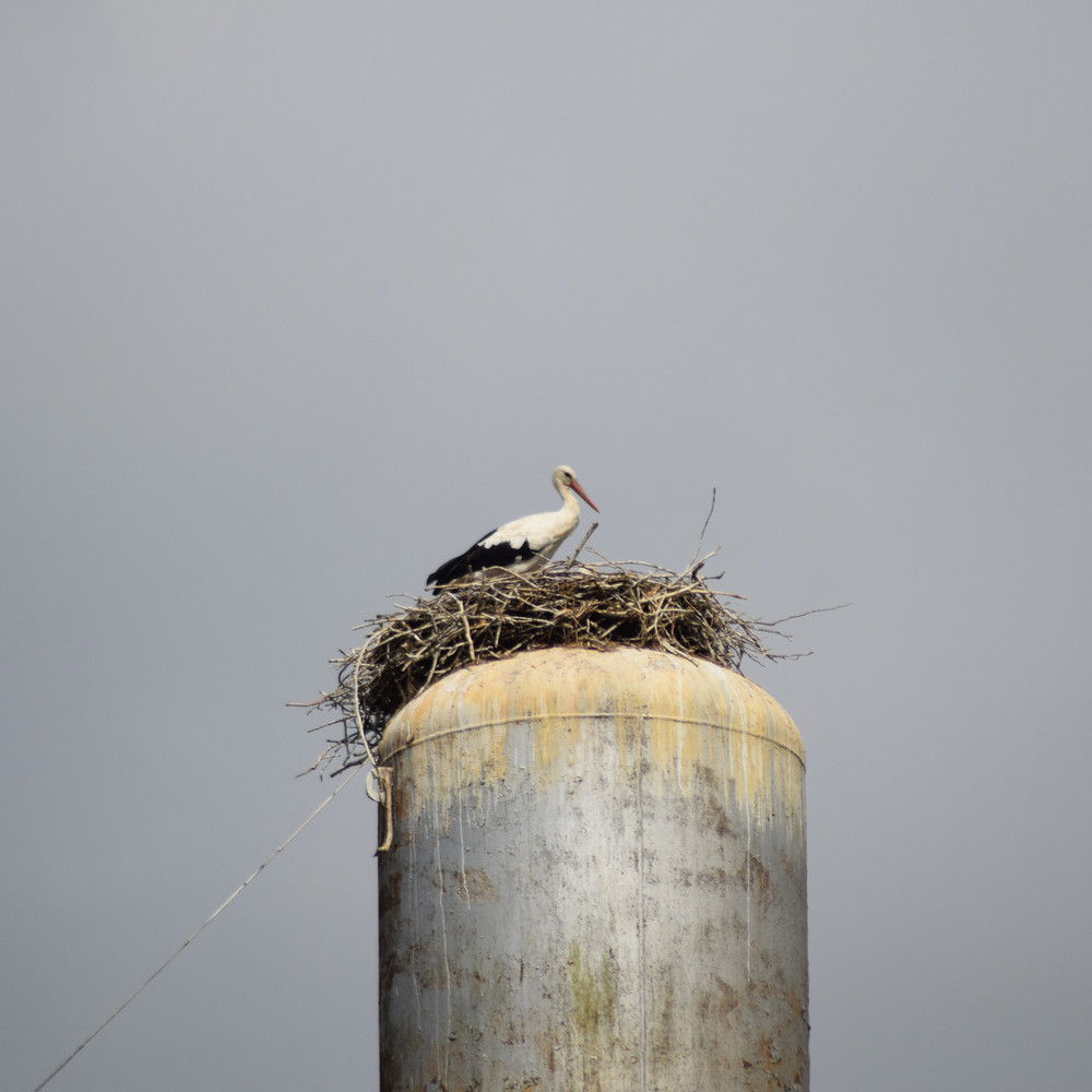 Stork on a roof of a water tower Stork nest