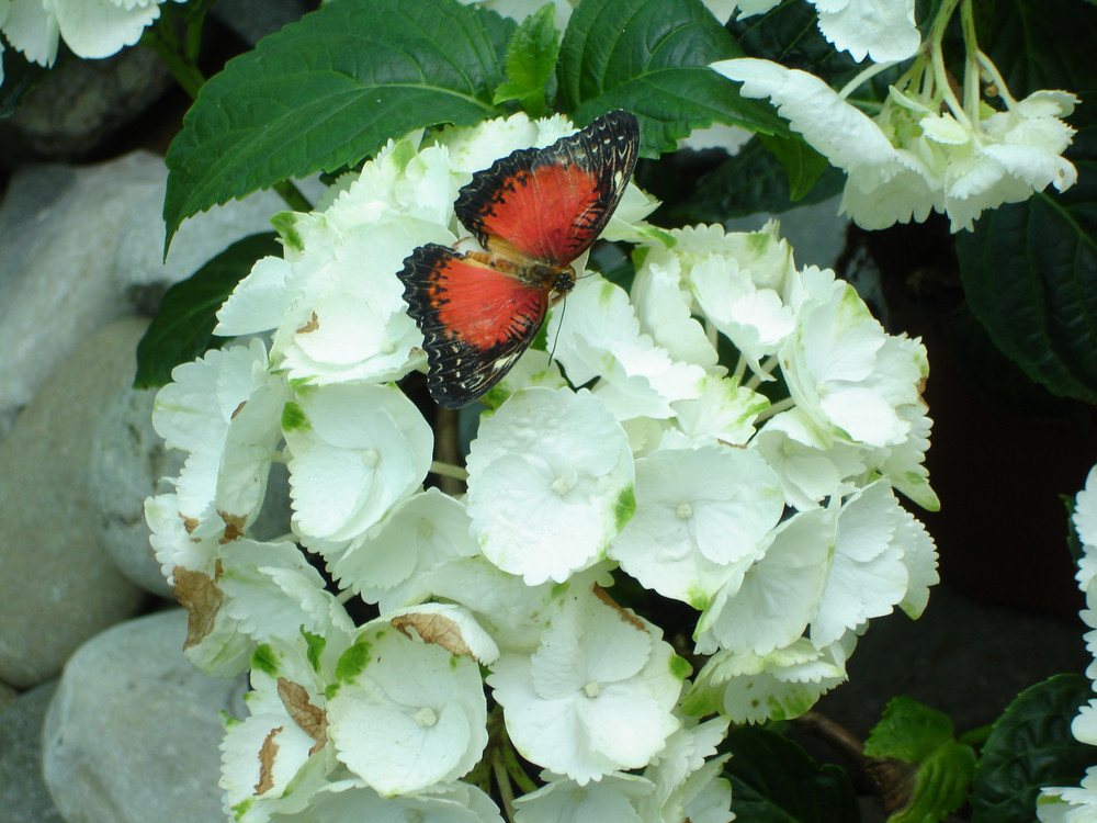 Butterfly on a flower The insects in the terrarium