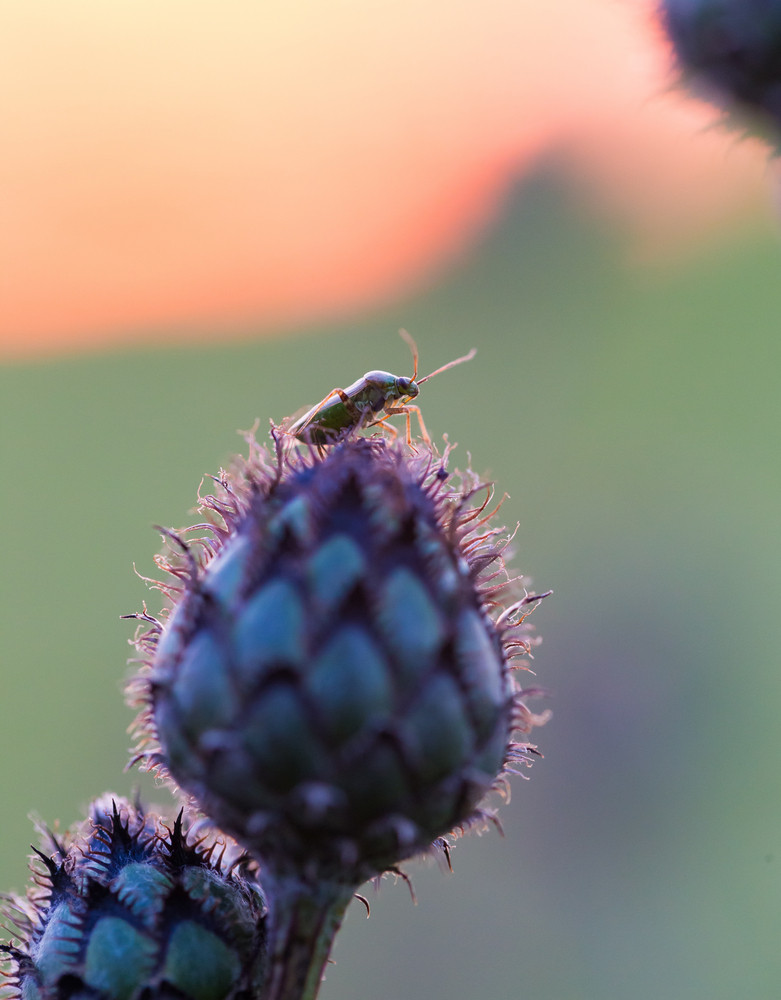 Bug sitting on plant