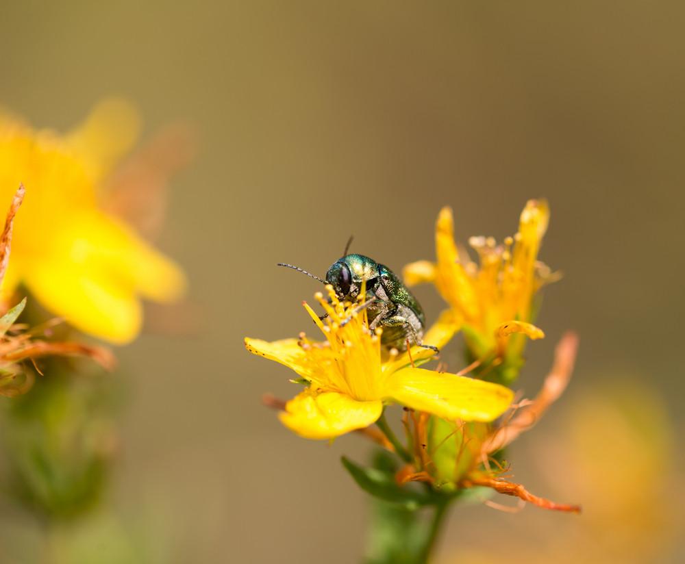 Little bug macro