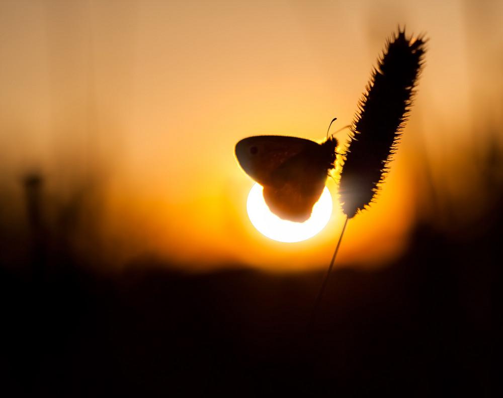 Schöne Schmetterling auf Pflanze sitzen