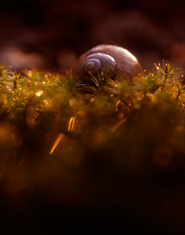 Empty snail shell lying on ground