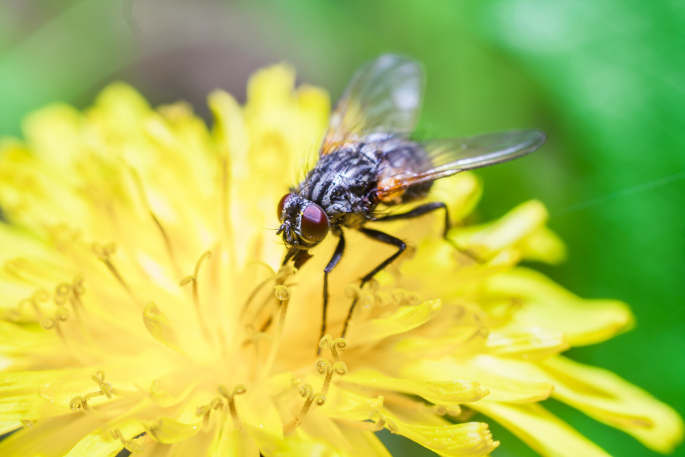 Fly sitting on plant