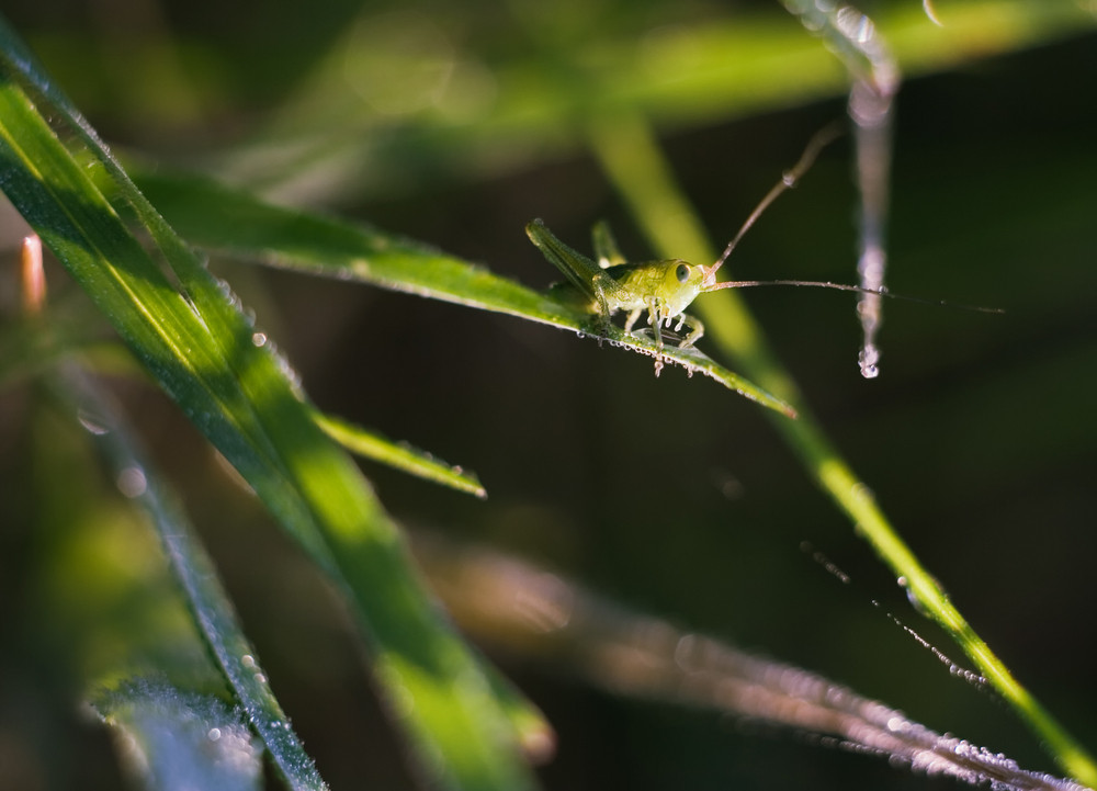 Grasshopper sitting on plant