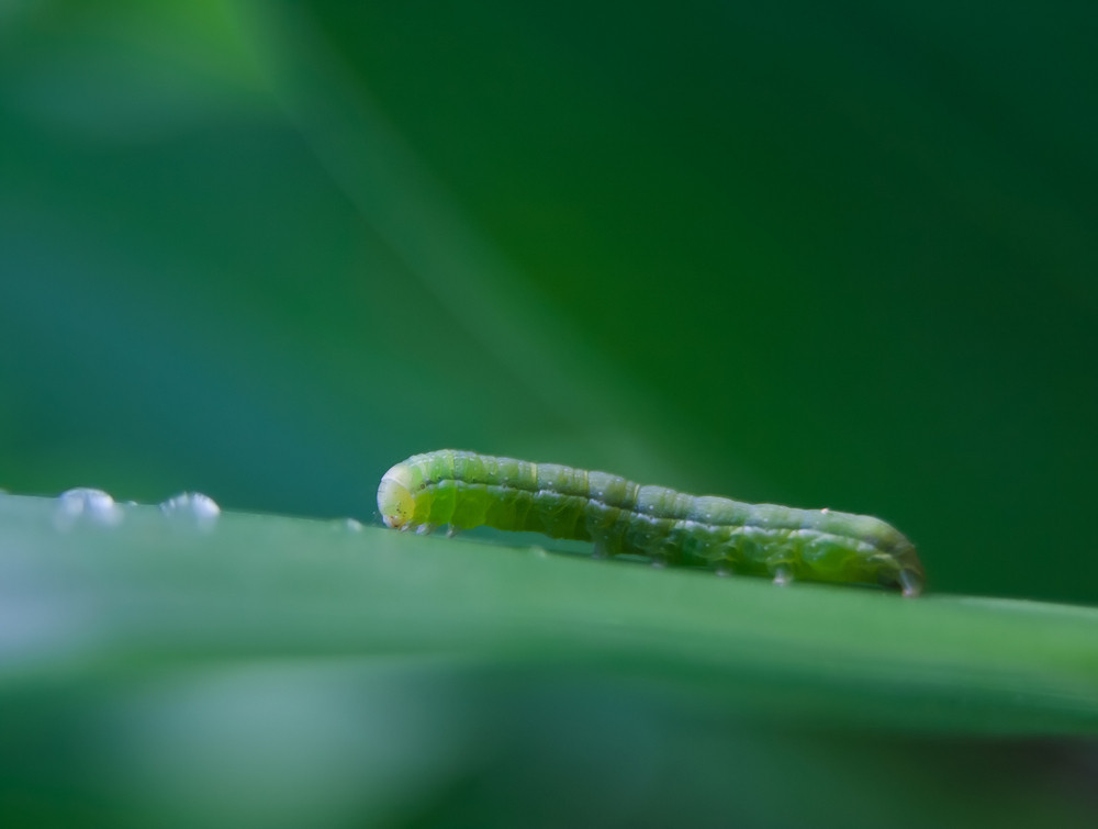 Caterpillar sitting on plant leaf
