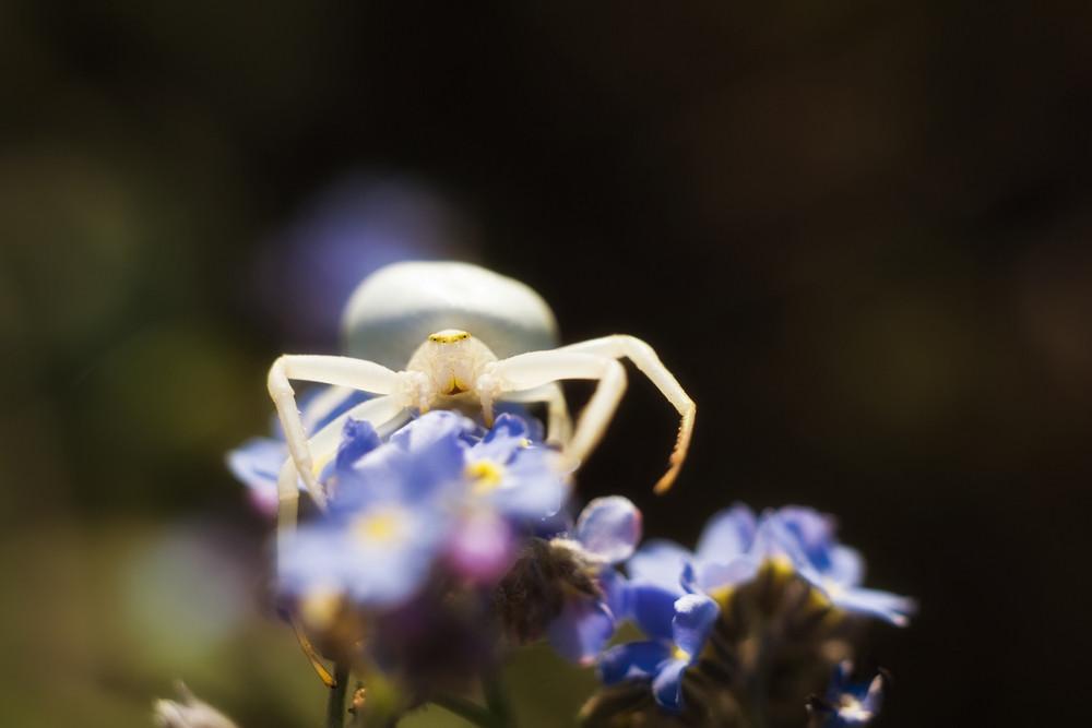 Flower Spider in nature