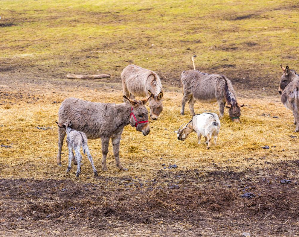 Herd of animals standing on pasture.