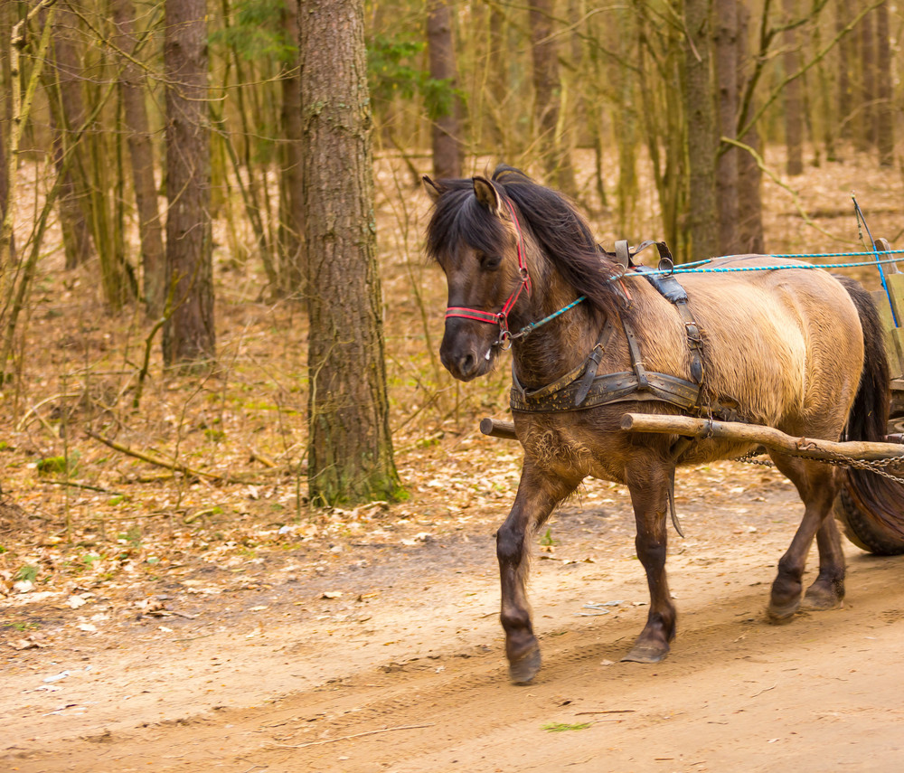 Brown horse in harness