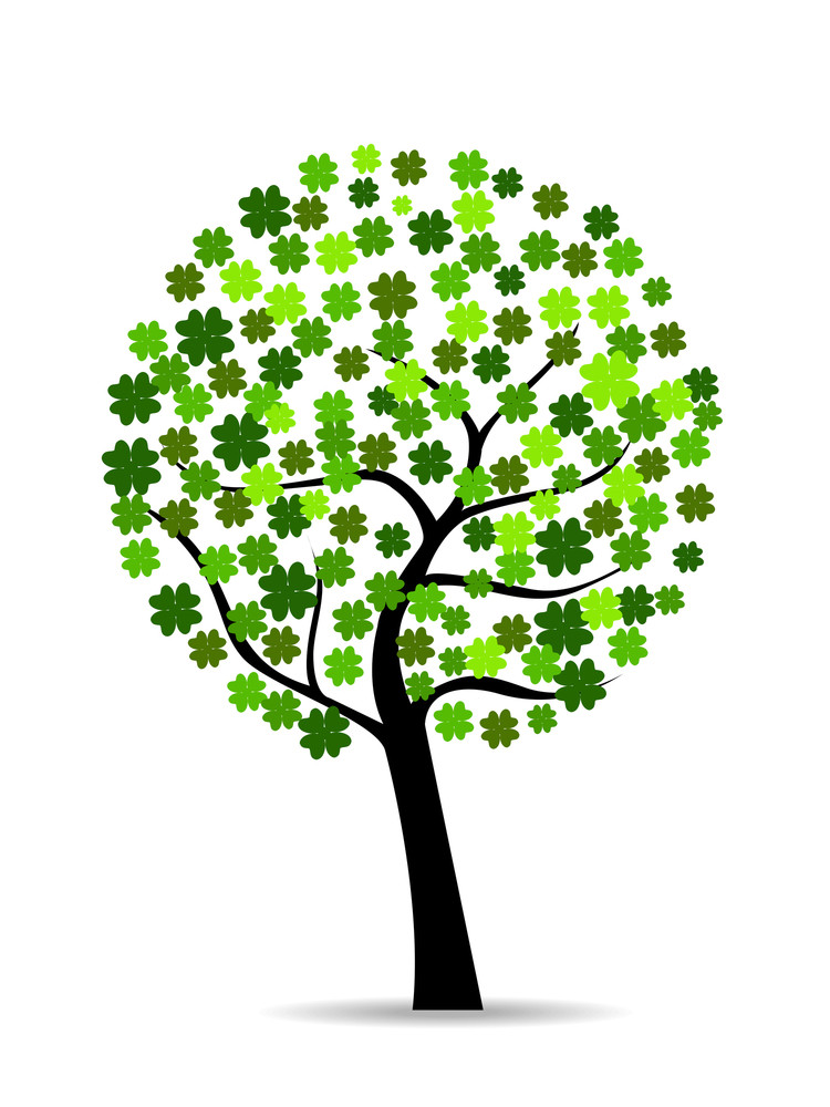 A Beautiful Colover Tree On White Isolted Background.