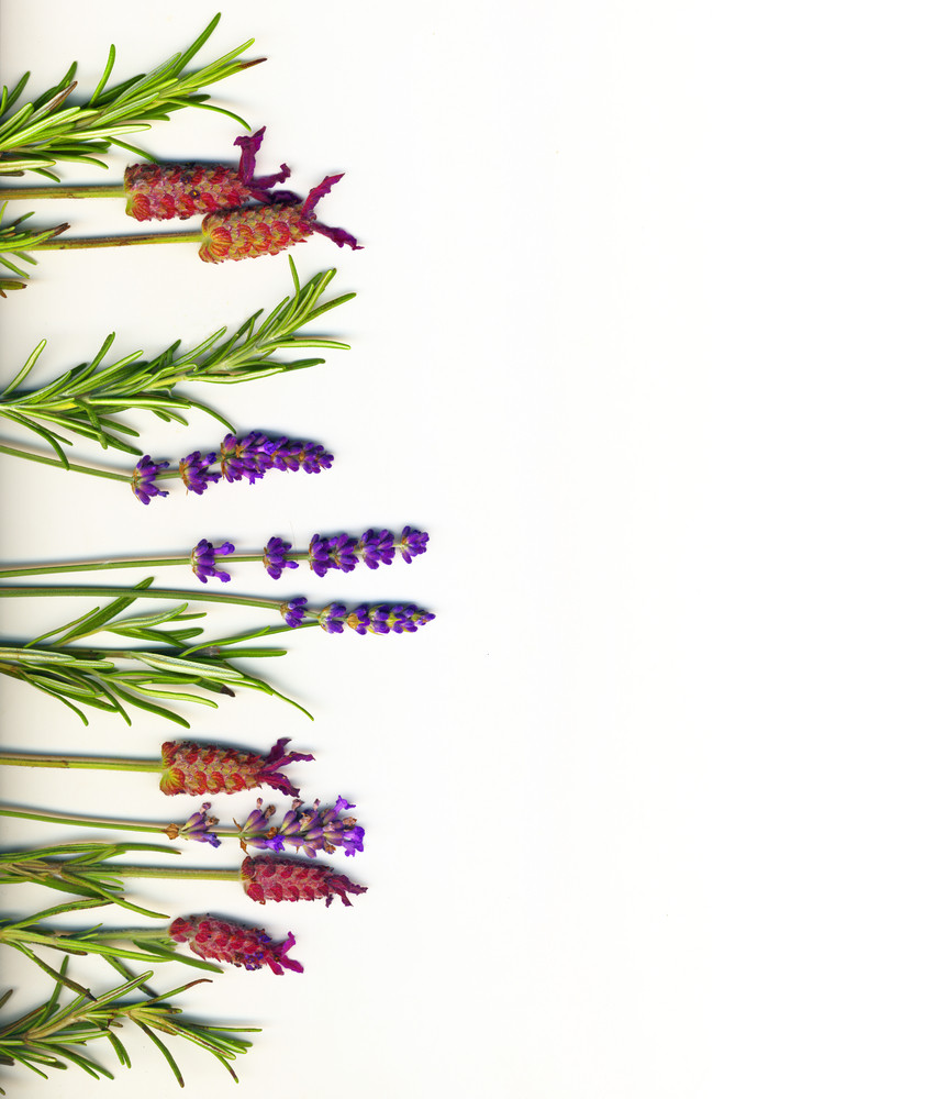 A Border Made Of Healing Herbs (lavander And Rosemary) On A White Background Isolated