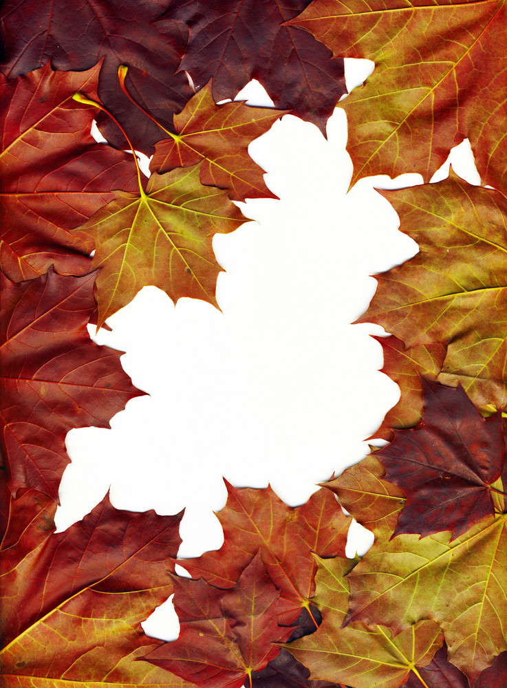 A Frame Made Of Beautiful Bright Leaves