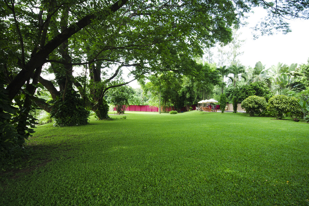 A green lawn in the park summer day. Summer landscape.