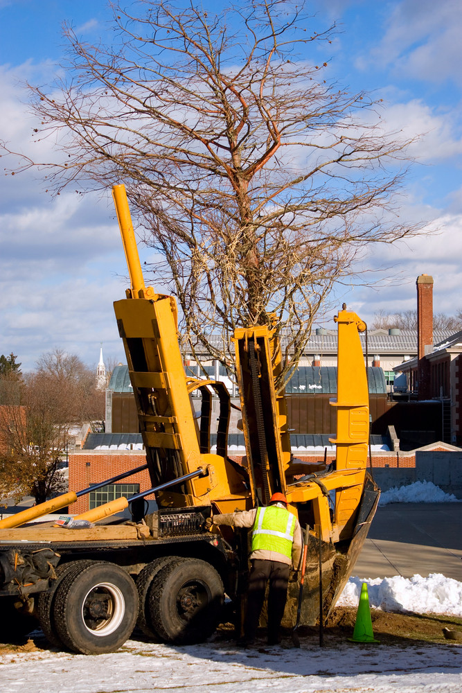A piece of heavy duty machinery that  transplants trees with its large scooping claw in action.